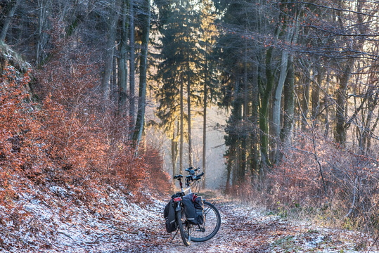 Wandering in the woods with a bike