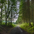 Cycling in the woods near Arlon