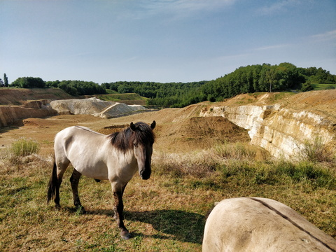 Horses on the edge of the quarry