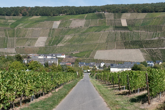 One of the very few slopes on Moselradweg