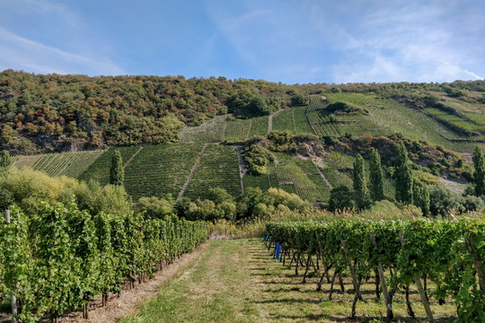 Wineyards