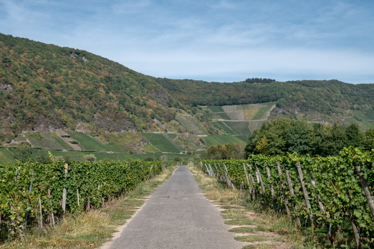 Cycleway in the wineyards