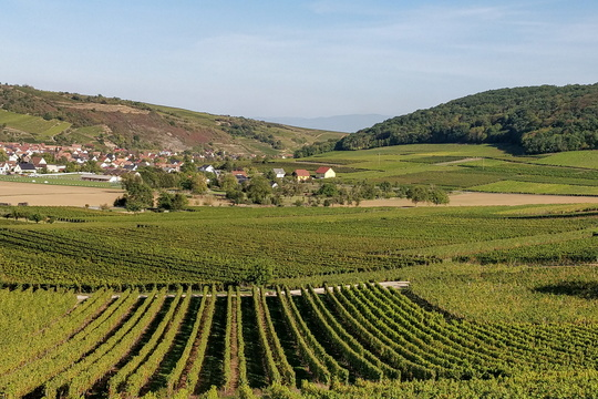 Vineyards near Soultzmatt