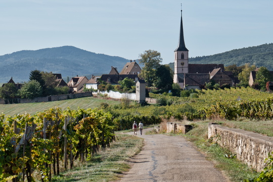 The village of Mittelbergheim