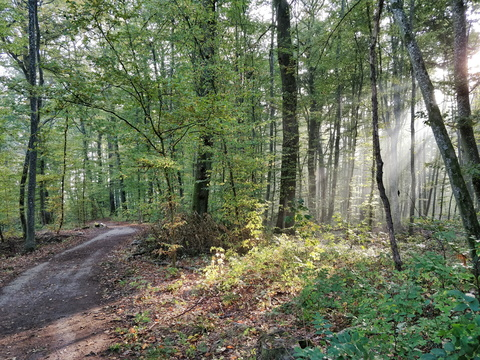 Sun rays in Bertrange forest