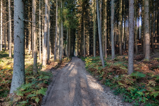 Forest track between Lorentzweiler and Fischbach