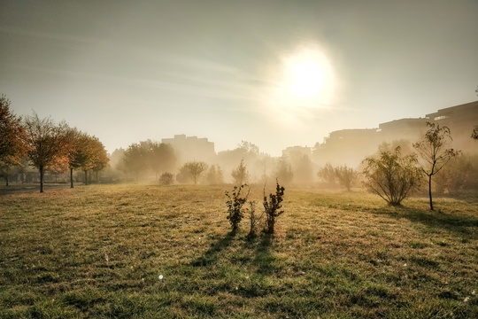 Dissipating fog in Parc Lentz, Bertrange