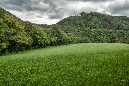 Grasslands in Ourtal near Parc Hosingen