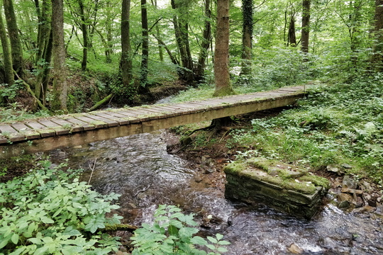 Wooden bridge near nowhere
