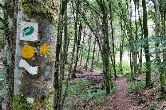 Hiking trail in Ourtal near Moulin de Kalborn