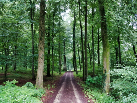 Forest track between Strassen and Bridel