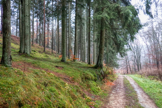 Forest track between Luxembourg and Mamer