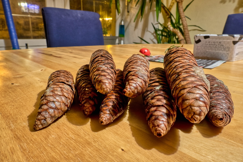 Pine cones collected from the top of the tree