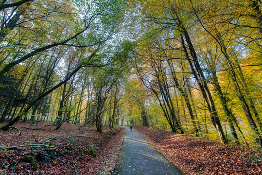Autumn day on piste cyclable d'Echternach
