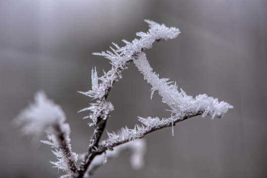 Frost on a branch