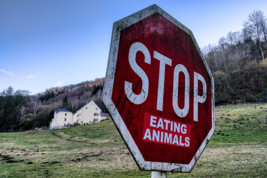 Stop eating animals!
