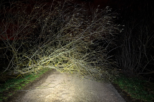 Tree down on the road