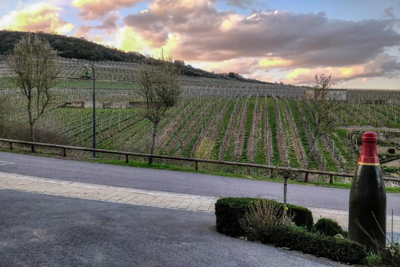 Vineyards in Ahn