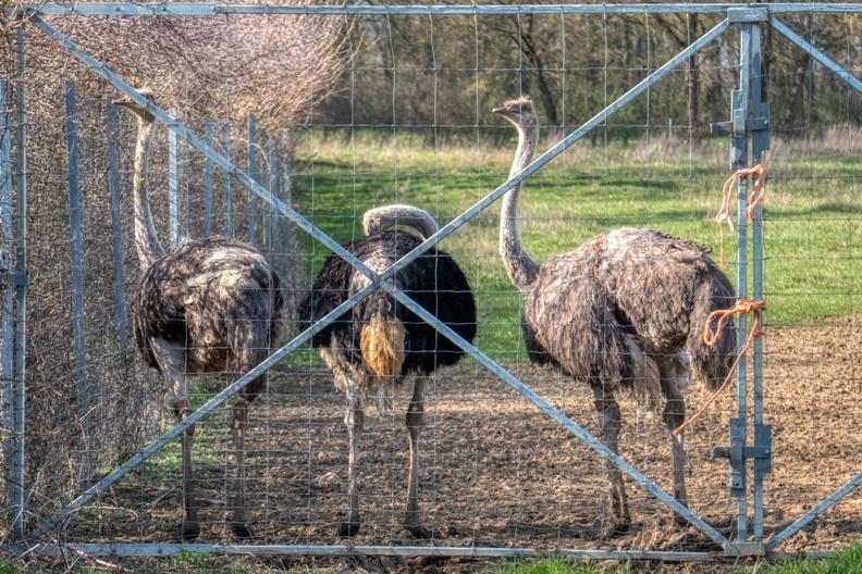 Uncommon birds in Luxembourg