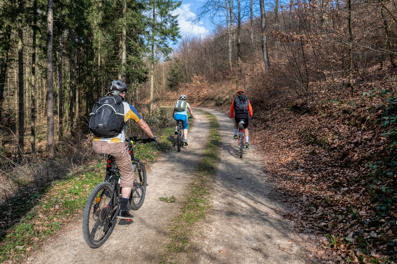 Group ride in the forest