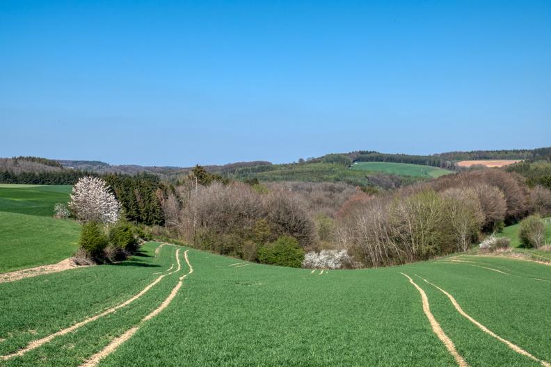 A curvy field
