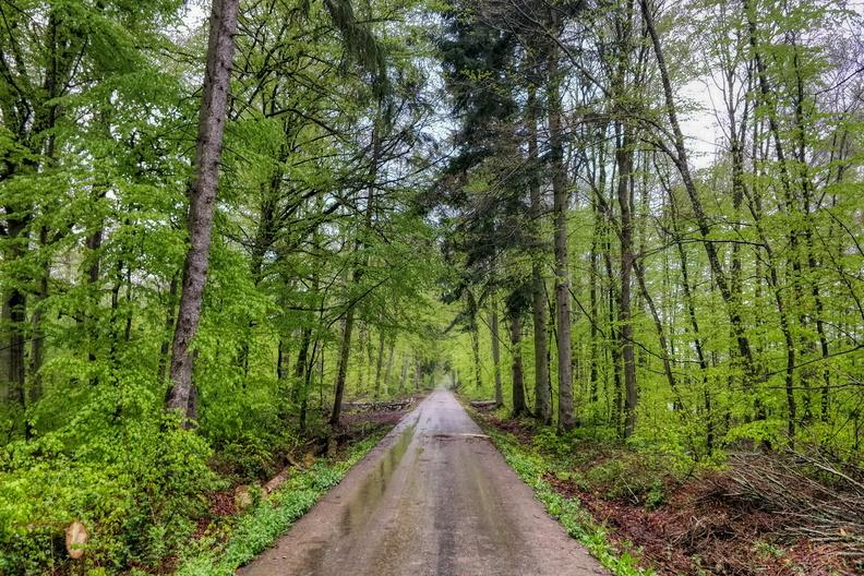 Rainy forest near Leudelange