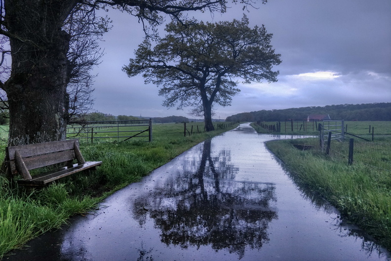 Dark and wet reflections