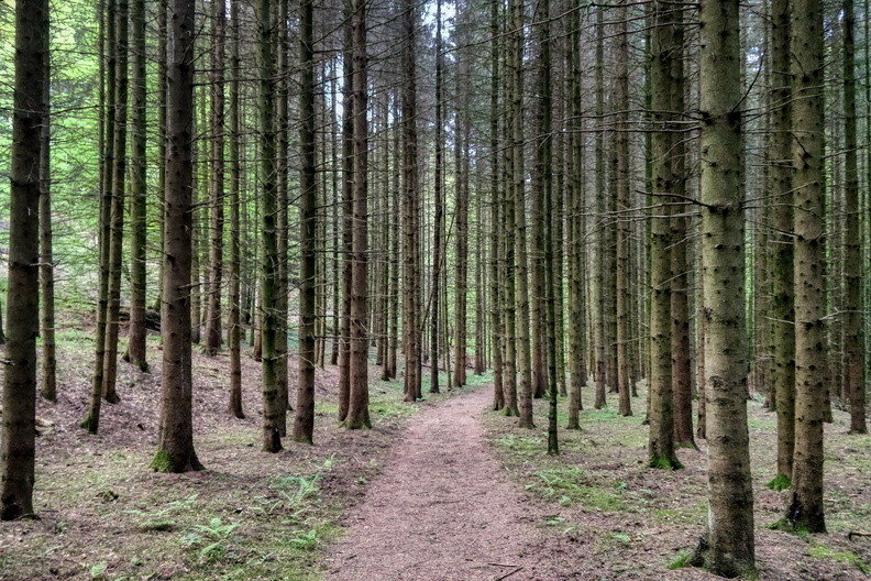 Forest path near Keispelt