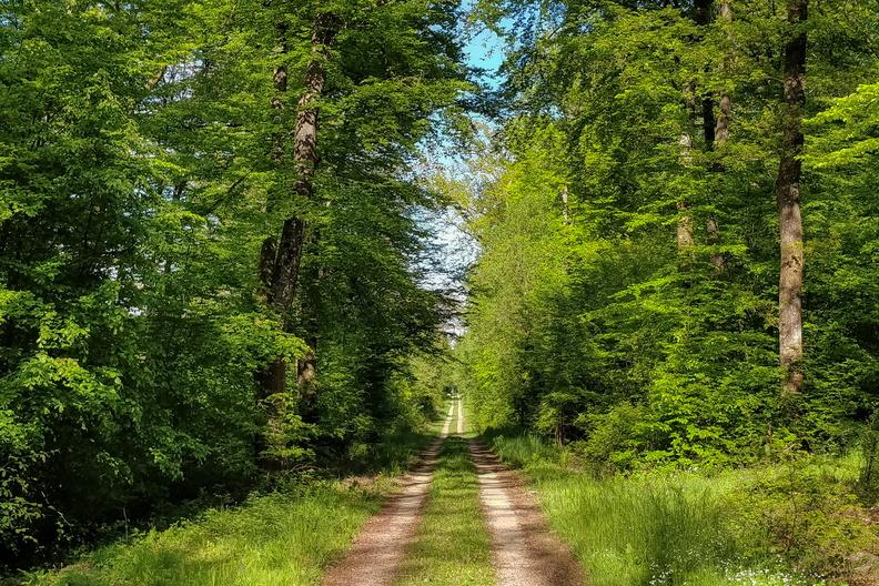 Forest track near Olingen