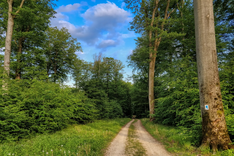 Track near Kehlen