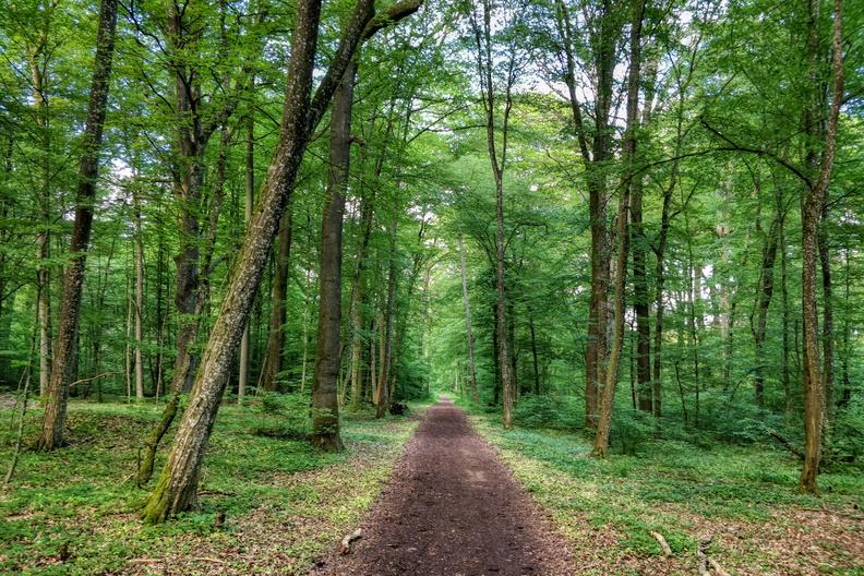 Capellen forest