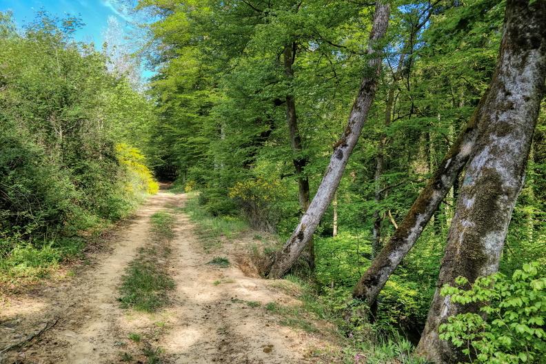 Track between Drëps and Capellen
