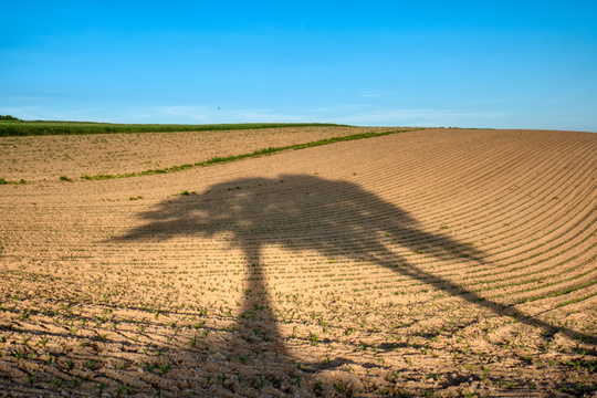 Trees' shadows on a field near Liefrange