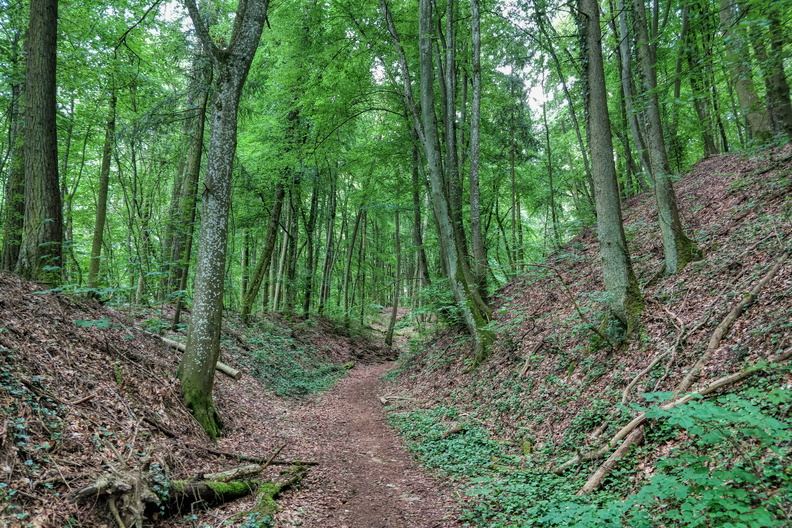 Forest in Dudelange