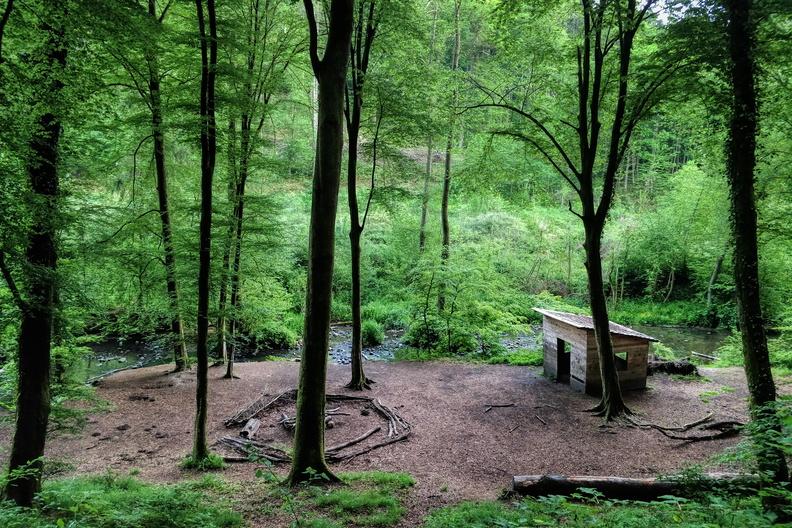 Forest near Mamer
