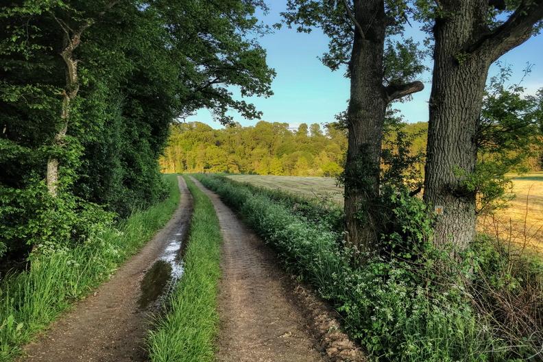 Track near Capellen