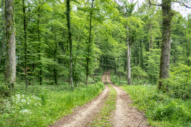 Forest track in Mamer