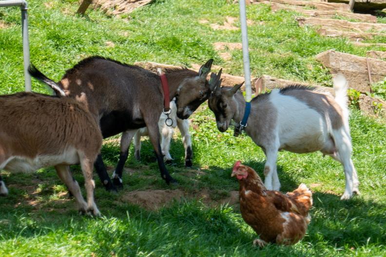 Farm in Garnich