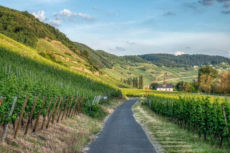 Vineyards in Mosel-Radweg