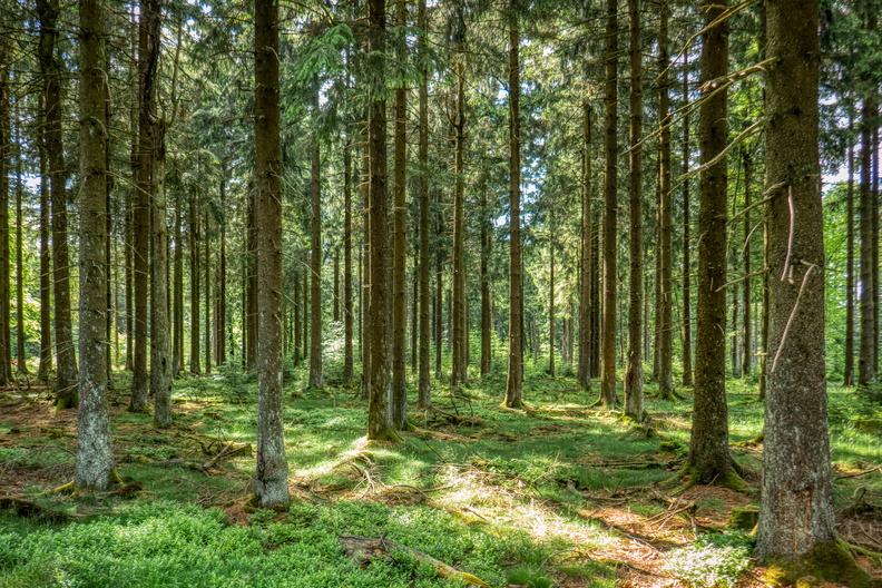 Trees in Hunsrück-Hochwald