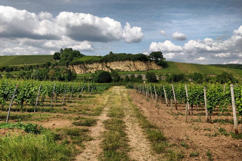 Vineyards near Palzem