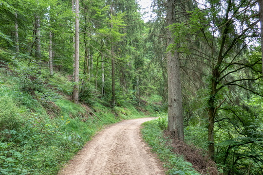 Unpaved Nims cycling route near Schönecken