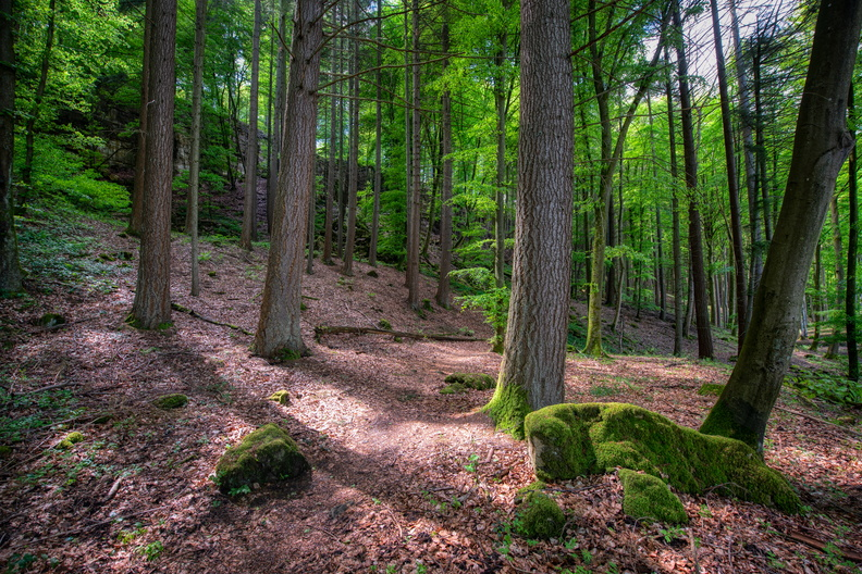 Sentier Autopédestre Echternach in the woods