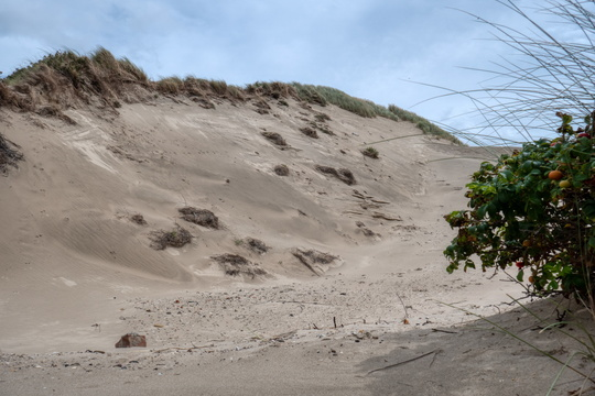 Sand dune next to North Sea cycling route