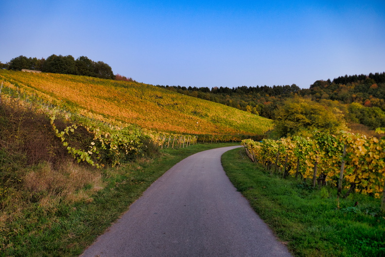 Vineyards near Remich