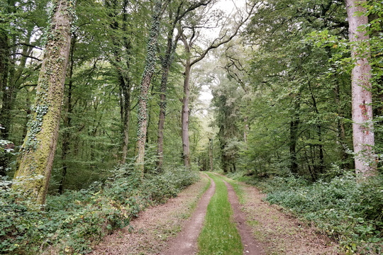 Forest track near Capellen