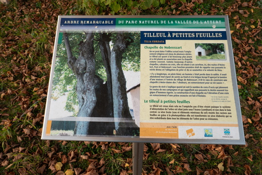 Remarkable lime tree information board