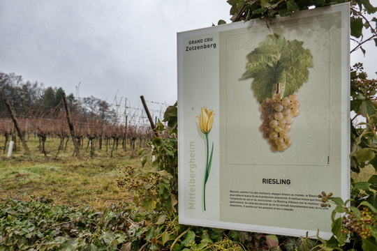 Riesling infomation board