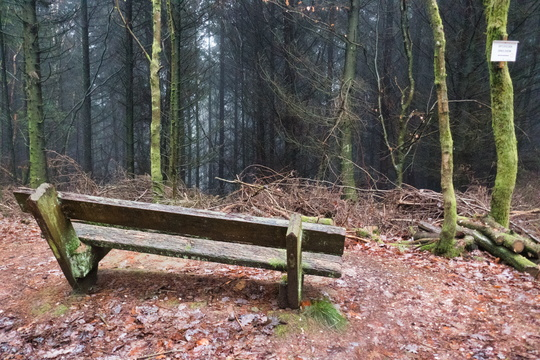 Forest bench near Rocher Kanzel, Ernolsheim
