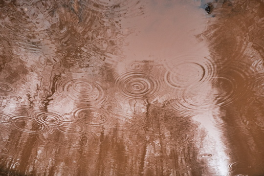 Reflections in the puddle